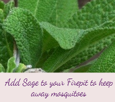 How to Keep Away Mosquitoes with Sage