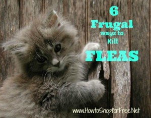 6  Frugal Ways To Kill Fleas