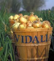 vidalia_onions