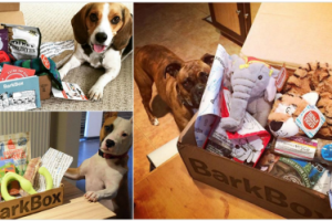 FREE Barkbox For Your Furry Friend When You Buy One