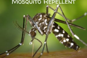 Home Made Mosquito Repellent