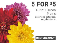$1.00 Mums @ Lowe's – In Store Only!