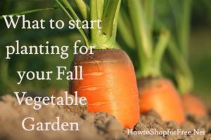 Fall Vegetable Gardens ~ What to Plant now