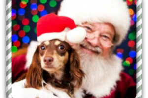 12/10-11: Free Photo of Your Pet with Santa at PetSmart!