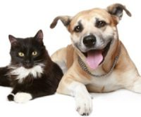 Free Pet Vaccines in GA, NY, CO, and CA!