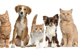 Sign up for The Humane Society Newsletter! Get Info to Help Animals!