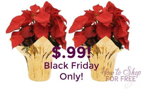 Poinsettia's only $.99!!  ~ Black Friday Deal!